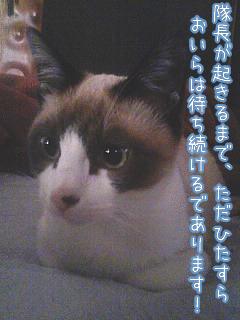 20080423-6.jpg