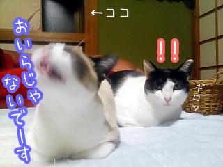 20080501-7.jpg