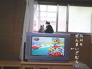 20080503-3.jpg