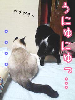 20080512-4.jpg