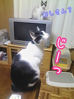20080515-4.jpg