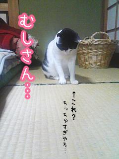 20080518-2.jpg