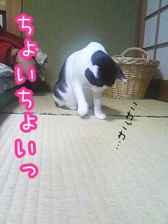 20080518-3.jpg