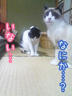 20080518-7.jpg