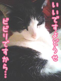20080520-5.jpg
