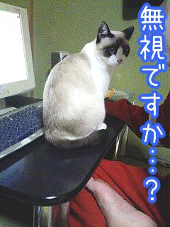 20080521-3.jpg