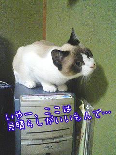 20080521-4.jpg