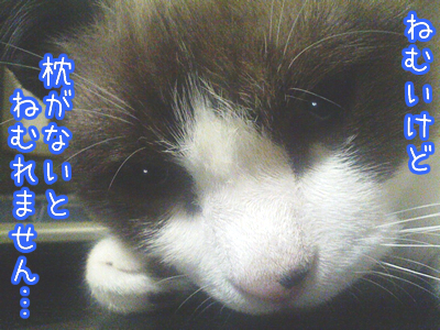 20080527-2.jpg