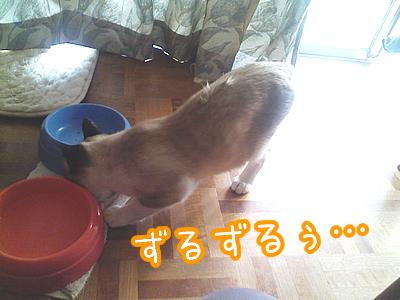 20080529-3.jpg
