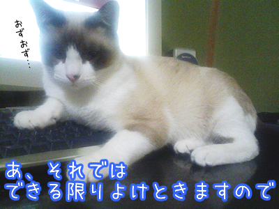 20080530-3.jpg