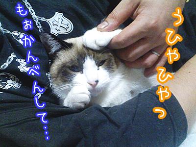 20080603-7.jpg