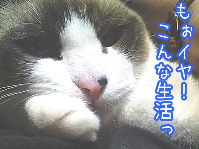20080603-8.jpg