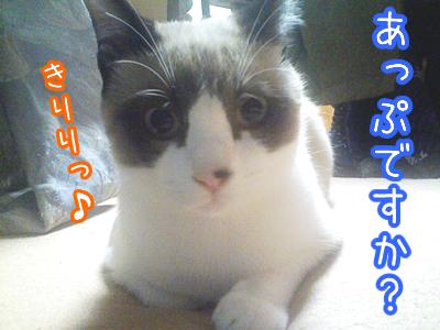 20080606-5.jpg