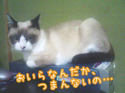 20080608-5.jpg