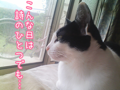 20080619-4.jpg