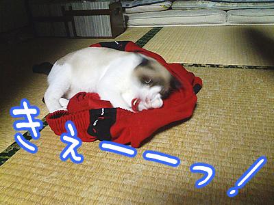20080622-11.jpg