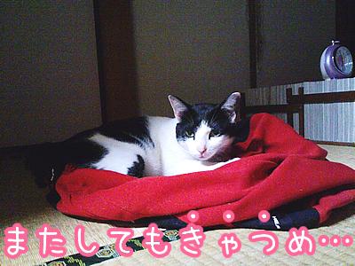 20080622-4.jpg