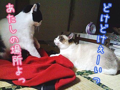 20080622-5.jpg