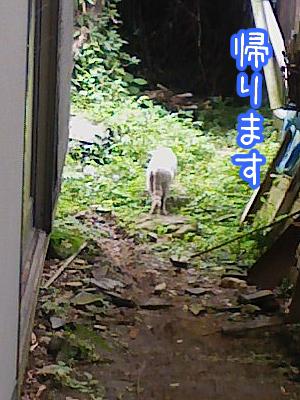20080624-10.jpg