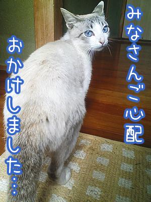 20080624-5.jpg