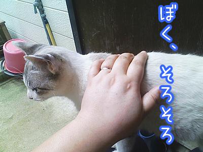 20080624-9.jpg
