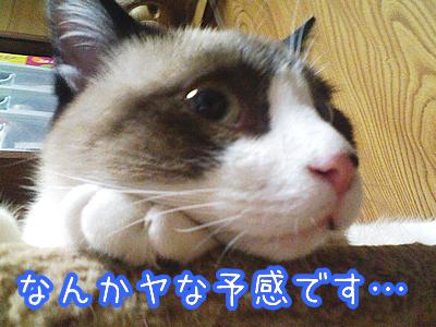 20080625-2.jpg