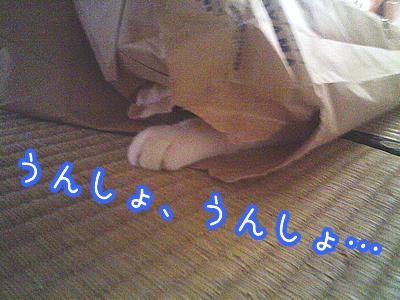 20080627-10.jpg