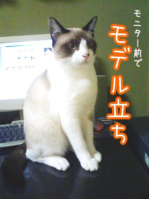 20080629-3.jpg