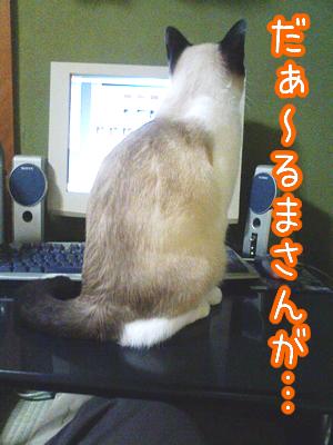 20080629-7.jpg