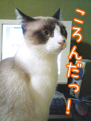 20080629-8.jpg
