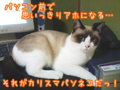 20080629-9.jpg