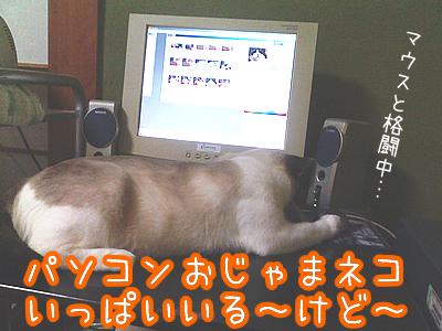 20080703-4.jpg