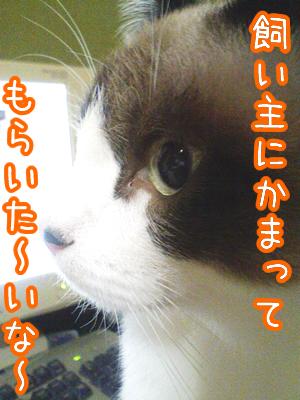 20080703-7.jpg