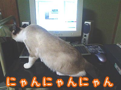 20080703-9.jpg