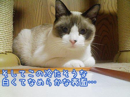 20080729-5.jpg