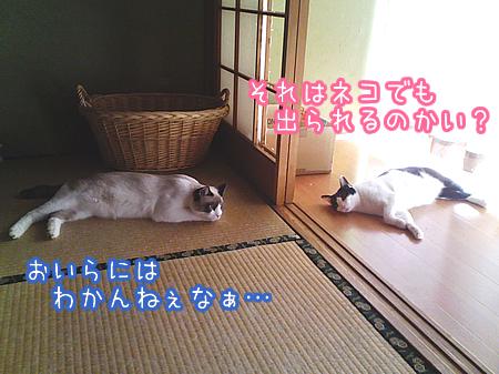 20080809-10.jpg