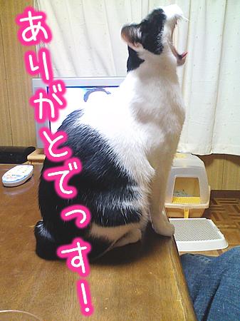 20080809-4.jpg