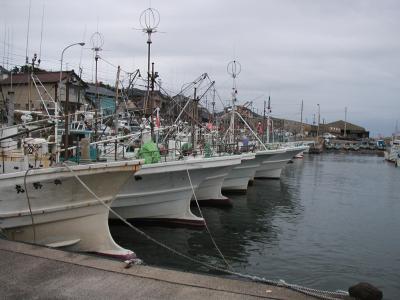 漁港の釣り船の群れ