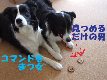dog20080316 015