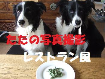 dog20080317 001