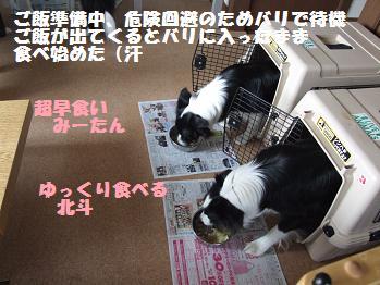 dog20080319 026