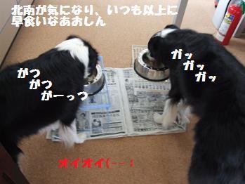 dog20080319 027