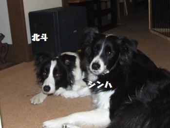 dog20080319 035