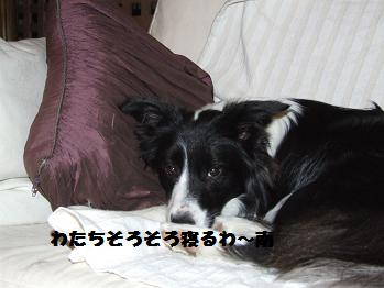 dog20080319 036