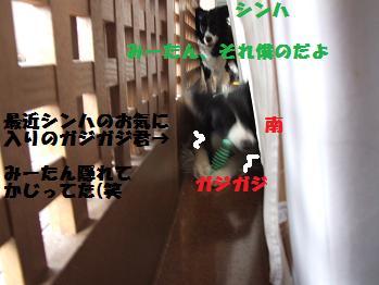 dog20080319 032