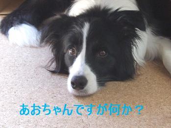 dog20080313 004