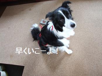 dog20080313 013