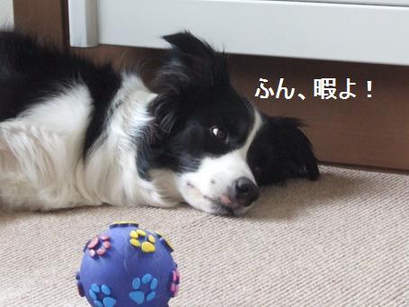 dog20080324 006