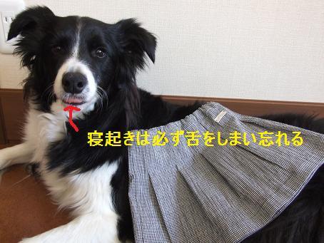 dog20080324 001