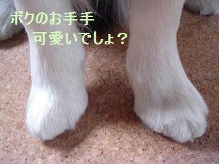 dog20080331 006
